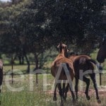 Actividad-Ganadera-Almuerzo-Campero (19)