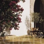 Hacienda-7-Actividades-Sevilla (19)