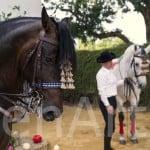 Hacienda-en-sevilla-eventos-16 (68)