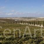 Bodega_Vanguardia_Eventos_Cadiz (2)